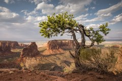 COLORADO-NATIONAL-MONUMENT-by-Scott-Wilson